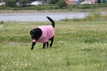 ピンクの服.JPG