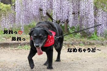 おれおれ20150501.jpg